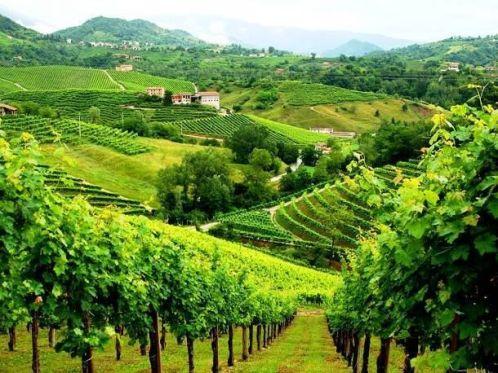 9f4292ef07e7e0d26c8b9c39dfa9f332--prosecco-vineyard